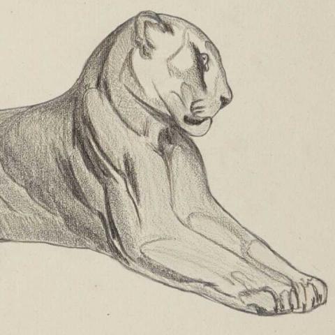 Panthère couchée. 1931.